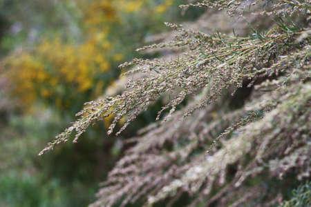 black textured background: Dry grass. Autumn grass.