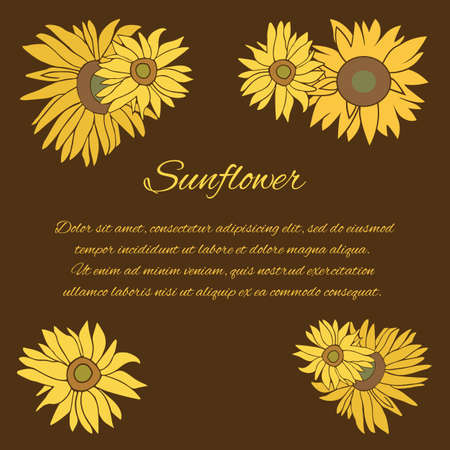halm: Sunflower greeting card. Yellow and green flower on the dark background