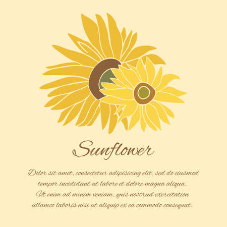 halm: Sunflower greeting card. Yellow and green flower on the bright background