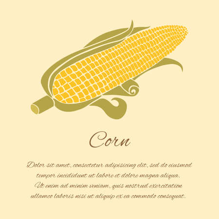 corn crop: Corn vector greeting card isolated on the bright background Illustration