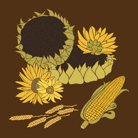 corn flower: Sunflower and Corn greeting card. Yellow and green flower on the bright background Illustration