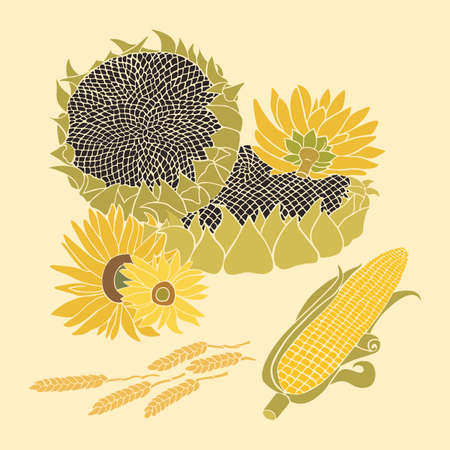 halm: Sunflower and Corn greeting card. Yellow and green flower on the bright background Illustration
