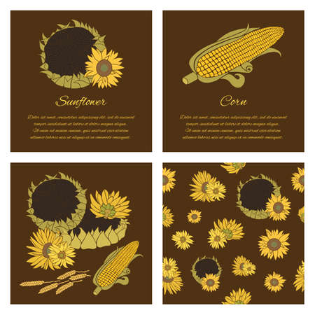 halm: Sunflower greeting card set. Yellow vector flowers on the dark background collection