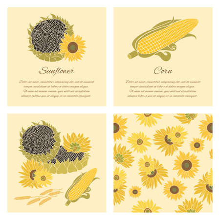 halm: Sunflower, corn and grain greeting card set. Yellow vector flowers on the bright and dark background collection