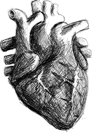 Realistic Black and White Hand-drawn Human Heart Sketch Vector
