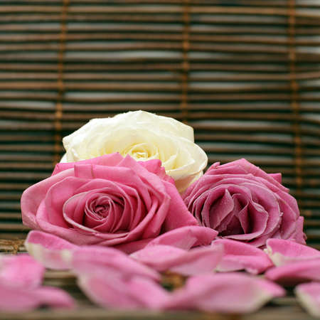 Romantic background with pink and white rose Stock Photo - 6356279