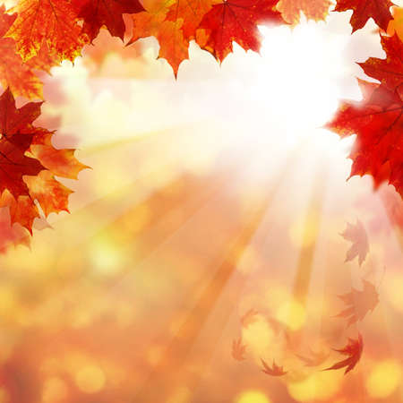 Autumn Background with Maple Leaves and Sun Ligth. Abstract Fall Border