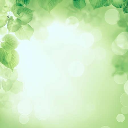 limetree: Abstract greenery foliage morning sunlight background