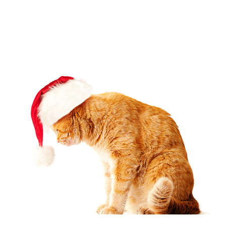 Red Cat wearing Santa Hat Isolated on White Background Stock Photo