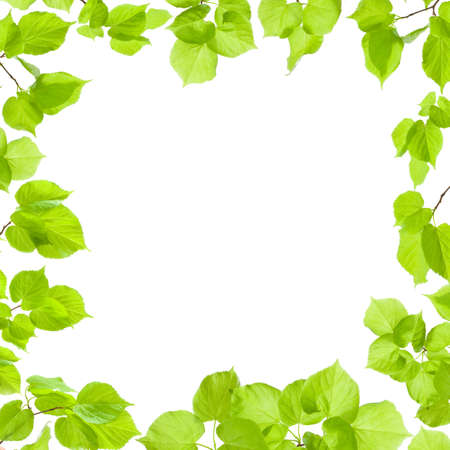 limetree: Green leaves frame isolated on white, border and background