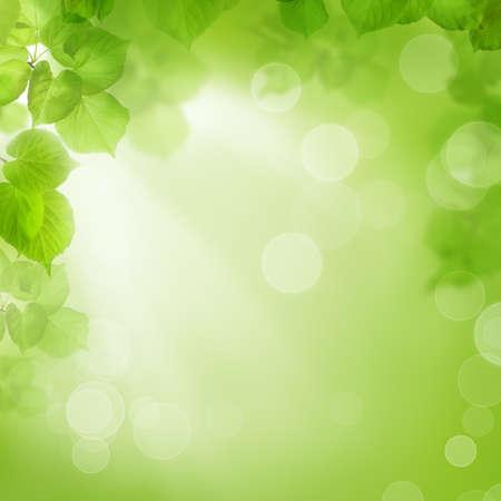 limetree: Background of green leaves, summer or spring season