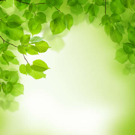 limetree: Green leaves border, abstract background Stock Photo