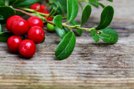 mountain cranberry: Fresh Cowberries with some leaves on wooden background