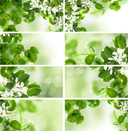 limetree: Green leaves border, summer and spring set Stock Photo