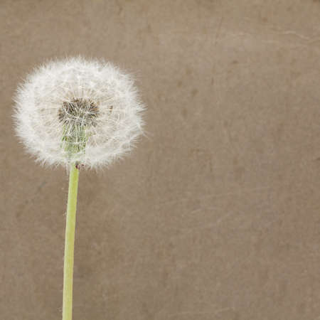 blowball: Blowball on Dirty Paper - Background
