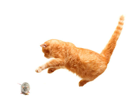 Pets - Cat and mouse isolated Stock Photo