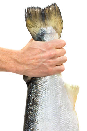 salmon fishery: Lucky fisherman caught the fish by the tail