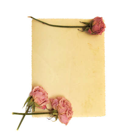 pale pink flower and vintage paper on white background