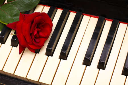 romantic concept - deep red rose on piano keys