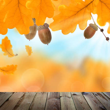 autumn background with yellow oak leaves acorns and empty wooden