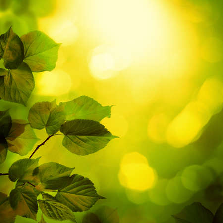 Summer Background with Linden Tree Twigs, Abstract Sunshine Bokeh and Empty Wooden Table with Copy Space. Template Mock up for Display of Product Stock Photo