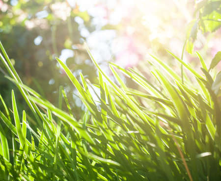 Bright green grass background in sunny day