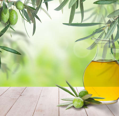 Olives on olive tree. Season nature image. Beautiful Sunny day for Harvest