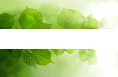 Green linden leaves border with white empty background