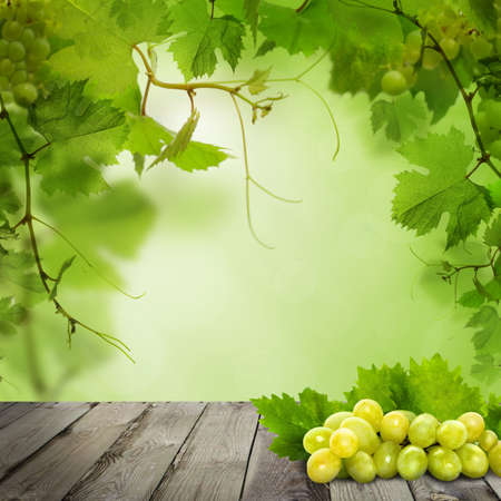 Organic grapes on old gray wooden board against abstract green leaves background Banque d'images - 122476536