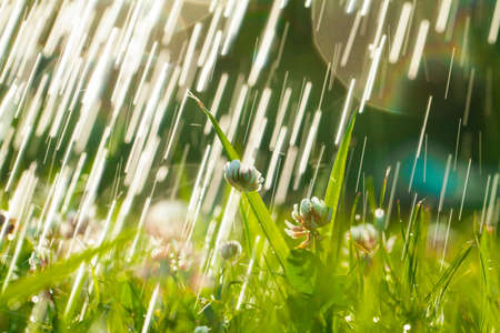 Beautiful natural background with clover, sun and raindrops. Art Magical summer landscape with bokeh Banque d'images