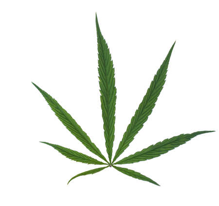 Green leaf marijuana on white. Herb object