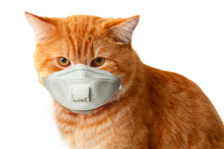 Red cat face in protective mask on a white background