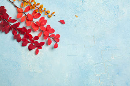 Fall composition with red autumn leaves on light blue stucco background with copy space Standard-Bild