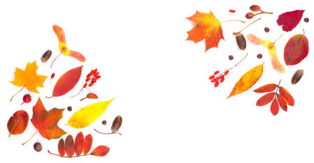 Fall composition border with autumn leaves isolated on white Standard-Bild