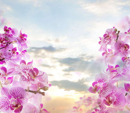 Pink orchid flowers on sky clouds background Banco de Imagens