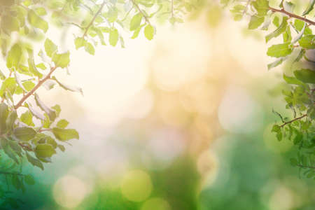 Beautiful bokeh background with green sparkle holly leaves and sparkle bokeh light