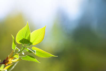 Green leaf on blurred nature background with beautiful bokeh and copy space for text. Green leaves background Stockfoto