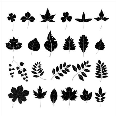 weegbree: Collectie bladeren