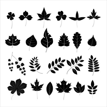 Collection leaves  Vector