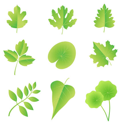 decision tree: A set of leaves different plants. There is in my portfolio like sets of leaves. Invite you to look.