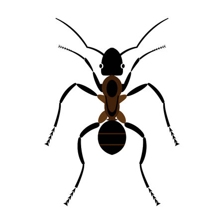 Ant on a white background.