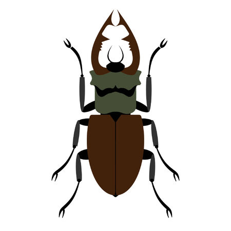 membranes: Beetle on a white background. Vector. Illustration