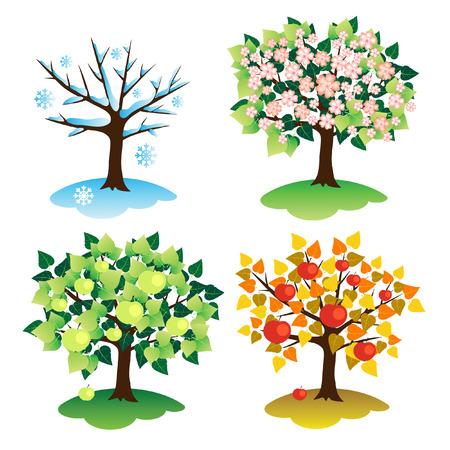 arboles frutales: Un conjunto de �rboles en cuatro temporadas. Apple y la temporada.  Vectores