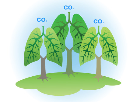 breathing: Concept: Trees - the lungs of the planet.