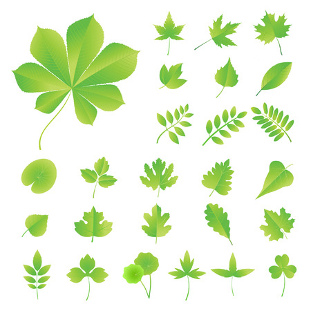 lindeboom: Set van bladeren van de bomen, struiken en planten.