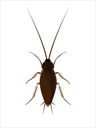 simplification: Cockroach.