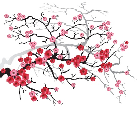 Illustration of flowering branch of Sakura