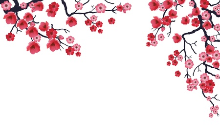 japan culture: Illustration of flowering branch of Sakura