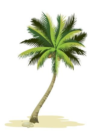albero frutta: Palma tropicale. Vettoriali