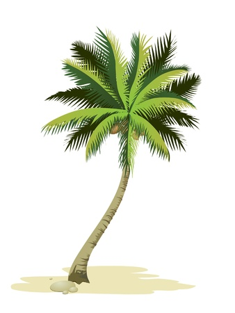 Tropical palm tree. Stock Vector - 9935713
